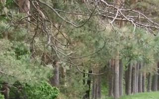 Прокуратура внесла представление из-за вырубок в Черняевском лесу