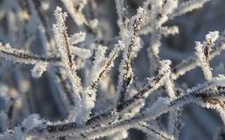 На Прикамье надвигаются снегопады и туманы