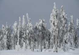«Резкое похолодание». В Пермский край возвращаются морозы