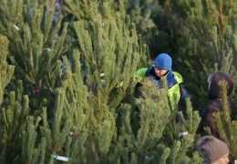 В Перми усилят патрулирование лесов для предупреждения рубки елей