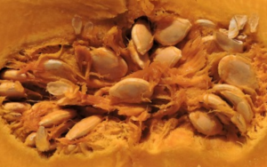 лечение простатита тыквенным соком